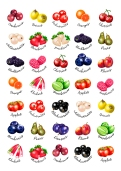 Fruit_stickers