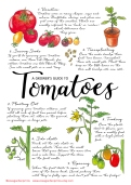 Growers guide to tomatoes