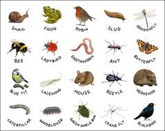 Wildlife stickers